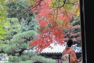京都・嵯峨野「二尊院」参詣~1