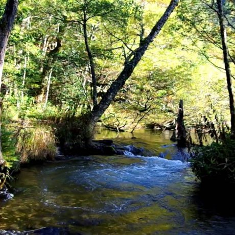 Kamikochi: Hiking along Azusa River