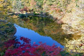 <p>A birdseye&nbsp;view of the duck pond from Izumi&nbsp;Nature Bridge</p>