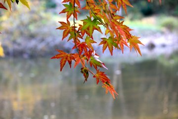 <p>Red, gold, and green leaves are so vibrant here</p>
