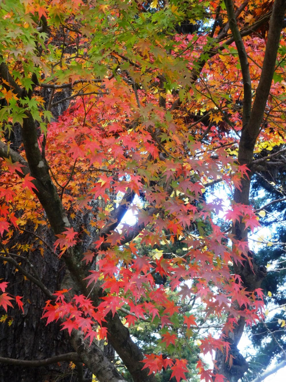 A small grove of maples stands over the main pool