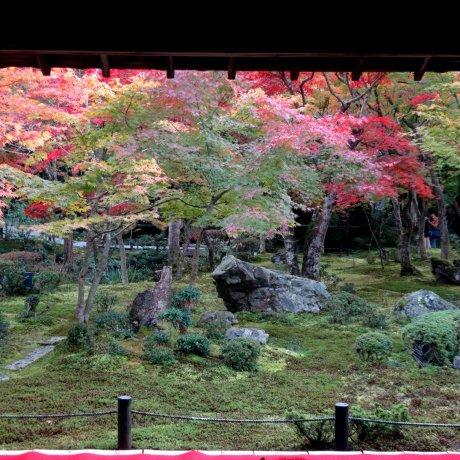 Fall Foliage at Enkoji Temple