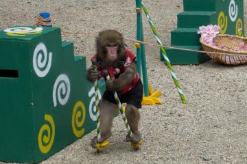 if you visit the temple on the weekend, you might enjoy a monkey show on the grounds, fairly close to Grant's tree. It is almost like a street performance.