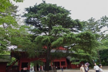 Before going up into Daiden, take a look at the large, beautiful cedar tree on the right just after entering the gate. It was planted by 18th US President, General Grant in 1870 as a memorial of his visit to Zojo-ji.