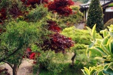 <p>Подобные садики делают Хаякаву очаровательной деревенькой</p>