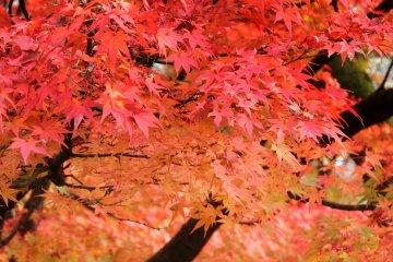 니시야마 공원(西山公園)의 단풍