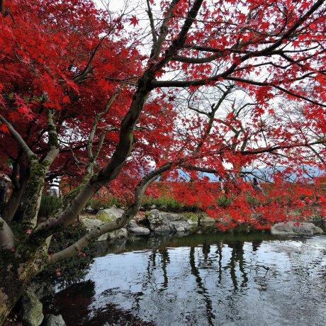 西山公園の嚮陽庭園