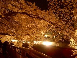 Люди прогуливаются под восхитительным навесом из цветов сакуры