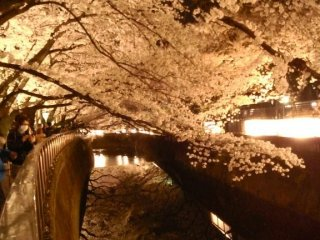 Ветви клонятся к каналу, отражаясь в темной воде, как в зеркале