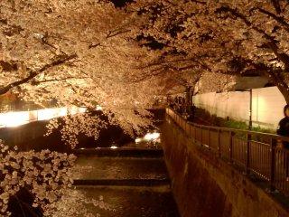 Красота японской природы завораживает