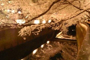 Ночная сакура в районе Сэйдзё