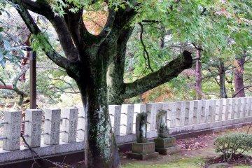 거대한 단풍나무의 아래에 나란히 서 있는 두 개의 작은 조각상들