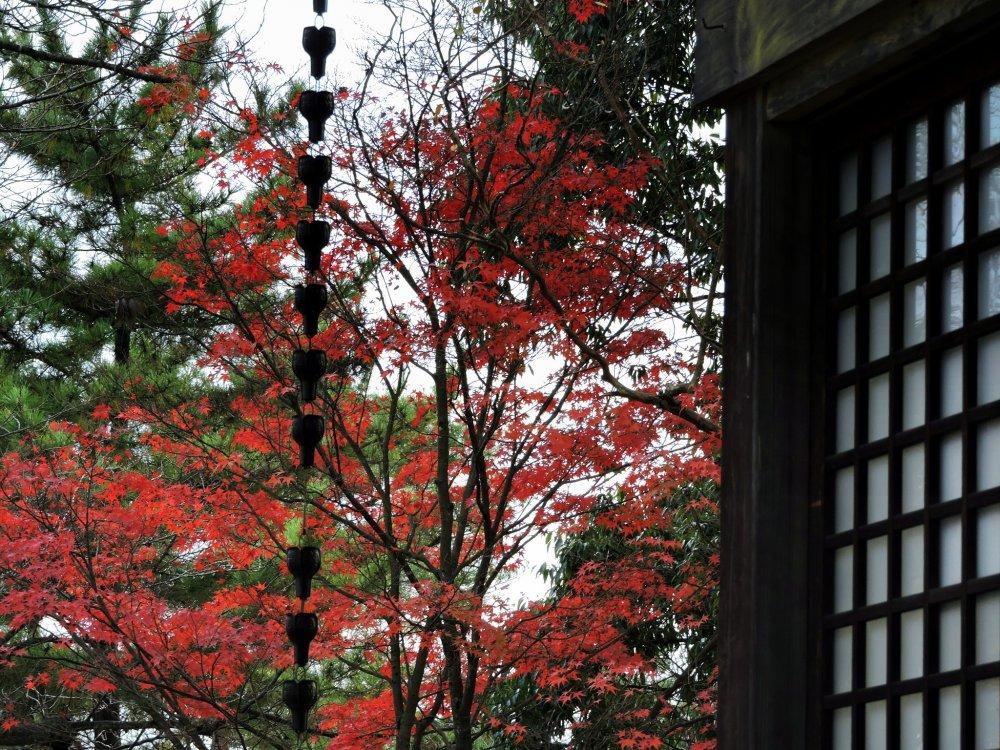 니시야마 공원 콘피라 사원 기도실에서 나온 붉은 단풍잎 보기