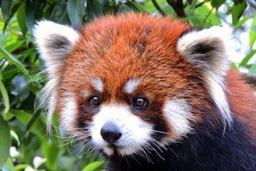 Fukui's Nishiyama Park Zoo