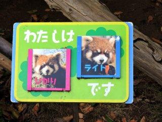 """Le panda sur la gauche se prénomme Hikari (""""lumière"""" en japonais) et le panda sur la droite s'appelle Light (""""lumière"""" en anglais)"""