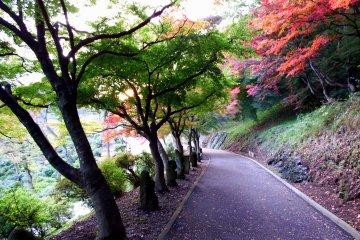 많은 동상들이 아름다운 가을 나뭇잎으로 장식된 오솔길에 서 있다