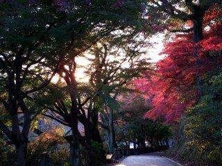 夕陽を浴びる西山公園「祈りの道」
