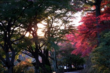 석양아래의 니시야마 공원의 기도길