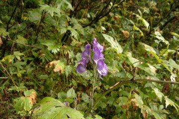 <p>A wild flower</p>