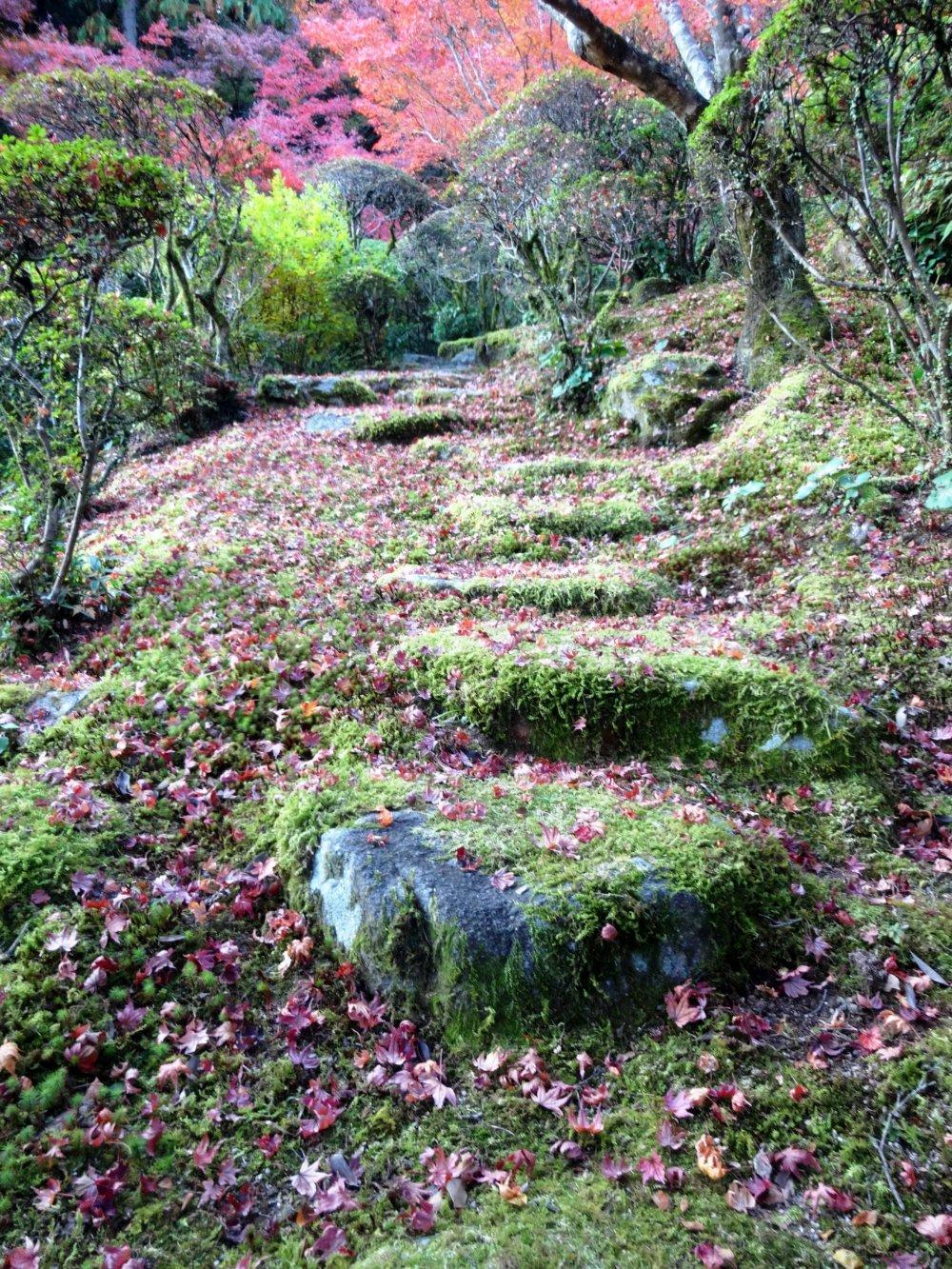 庭中の小道は知られざる場所へ続く