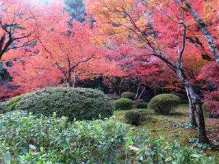 庭園は(秋は)11月のみ、通常紅葉のピーク期に公開される