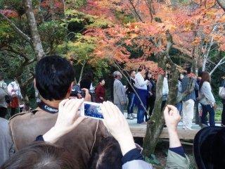 公開されるのは、一年に(秋は)9日間のみなので、多くの観光客と共に九年庵の庭園を鑑賞する。