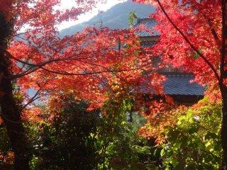 佐賀の山々へ延びた紅葉越しの眺め