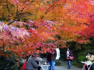 九年庵の入り口近くでは、モミジの木々の下でお茶できる