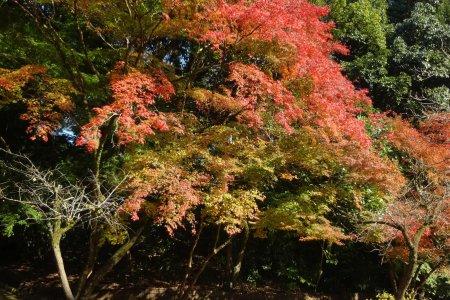 Công viên thiên nhiên Tatsuda