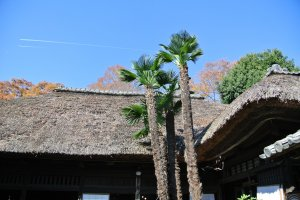 This house with a thatched roof is Higeta Aizome (indigo) Koubou (Studio). It is just next to the Mashiko Information Center