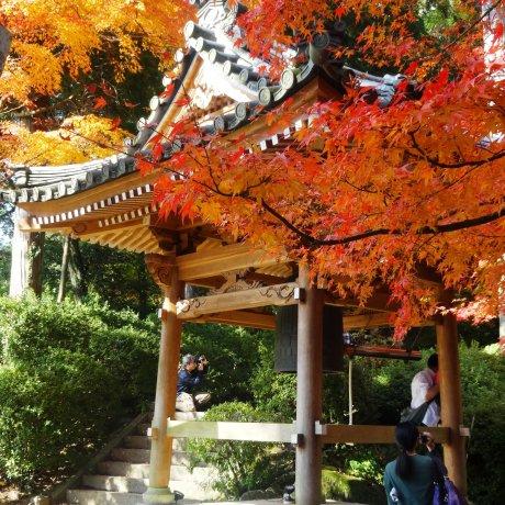 Daikozen Temple