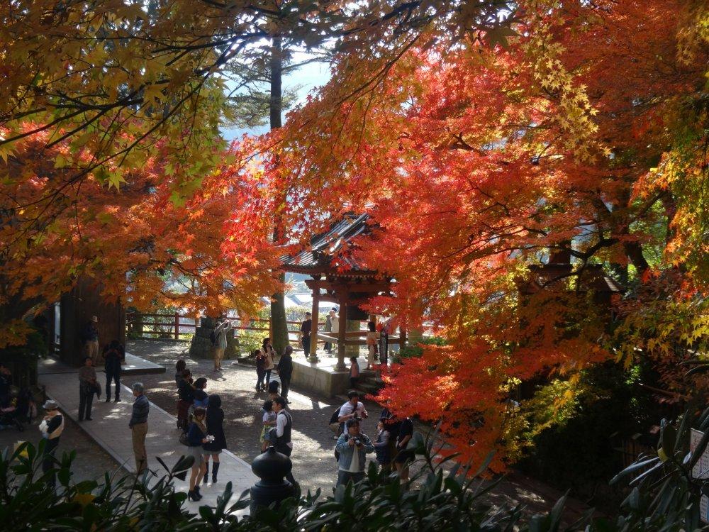 寺の境内が秋の色であふれる