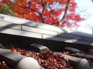 ここでの紅葉は11月後半に見頃を迎える