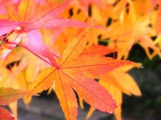 ここを含め佐賀の他の地域でも、紅葉は12月初旬までつづく