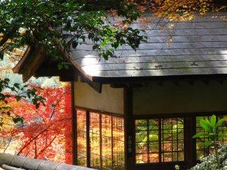 ガラス窓の茶屋が秋の紅葉を映す