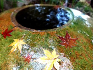 モミジの葉に覆われる手水鉢