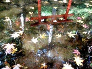小さな神社の鳥居が、庭の池のひとつに反射して映る