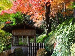 モミジが庭の休憩所に美しい背景を降ろす