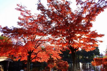 석양 아래 방사형 적색 잎