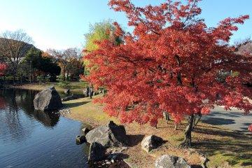 연못 옆에 있는 빨간 단풍잎