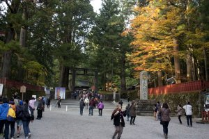 บริเวณทางเข้าศาลเจ้านิกโกะโทโชกุ (Nikko Toshogu Shrine) ที่จะต้อนรับเราด่านแรกด้วยประตูโทริอิหินอันเก่าแก่และแข็งแกร่ง