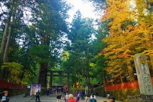 ความงดงามของในฤดูใบไม้เปลี่ยนสีของด้านหน้าทางเข้าศาลเจ้านิกโกะโทโชกุ (日光東照宮 – Nikko Toshogu) ที่ต้อนรับเราด้วยประตูโทริอิหินอันเก่าแก่งดงาม