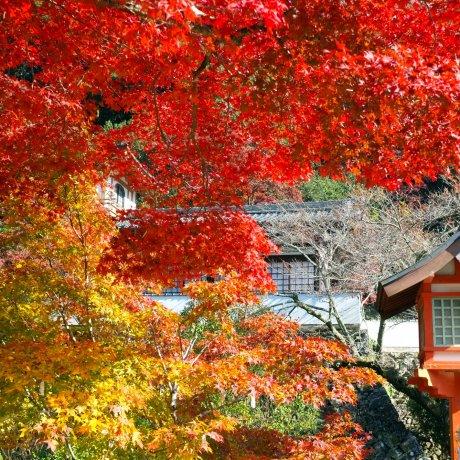 Выходные в парке Мино, Осака