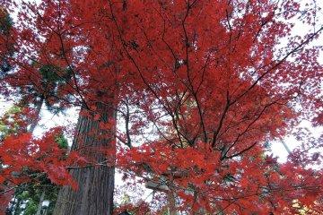Multi-colored Kakyo Park in Echizen