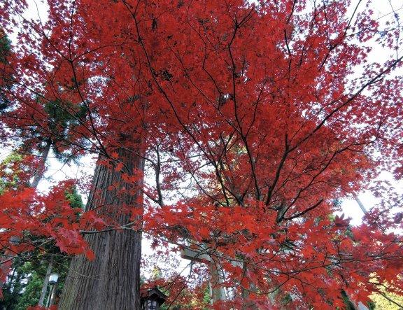 O Colorido Parque Kakyo em Echizen