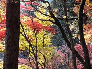 A colina estava tão colorida no Outono no Parque Kakyo nacidade de Echizen