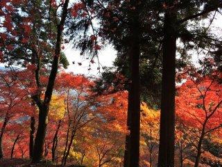 Toda a colina estava decorada com folhas coloridas