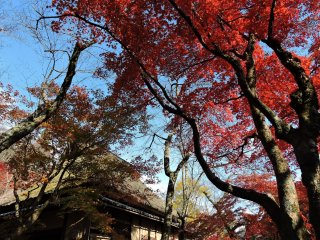 Telhado de palha da Furusato-no Ie rodeado de coloridas folhas de Outono
