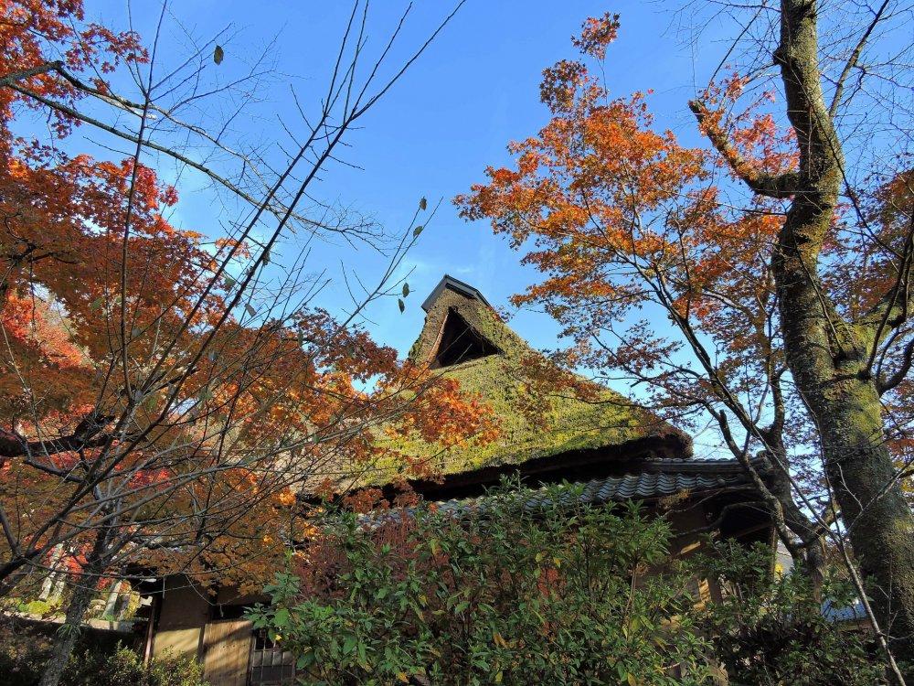 Casa de campo japonesa, Furusato-no Ie, rodeada de árvores de bordo cor-de-laranja sob o céu azul no Parque Kakyo