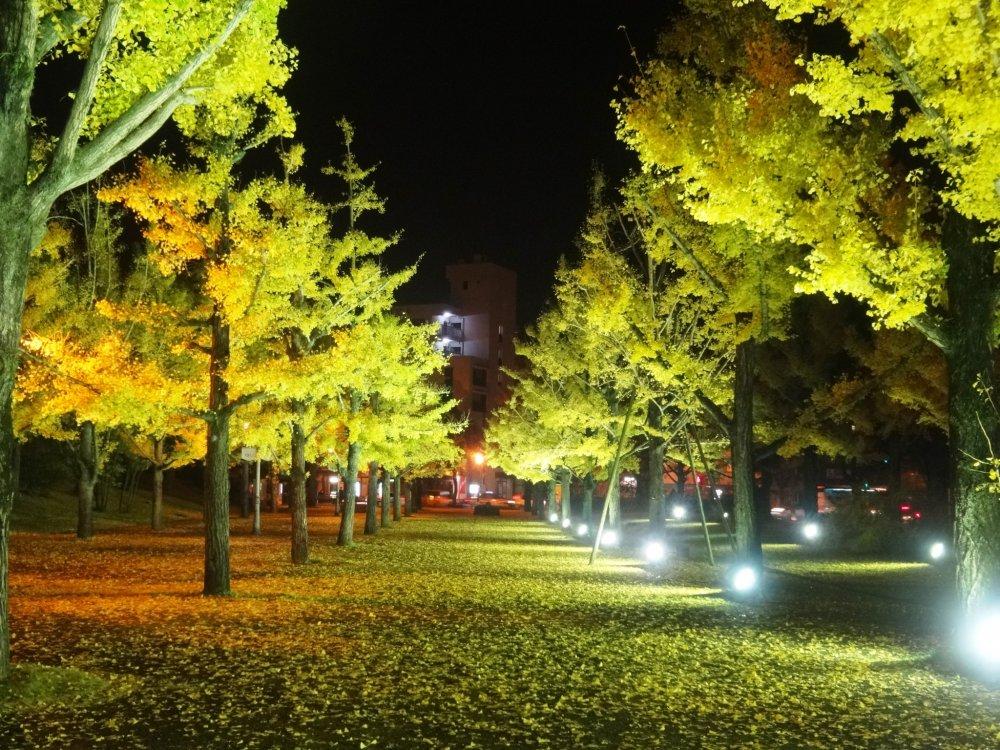 Плаза в префектурном офисе Кумамото красиво освещена в течении ноября